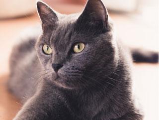 Gatto in posa assicurato con My Insurance